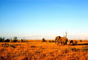 Kenya Africa  - photo by Dave Dyet