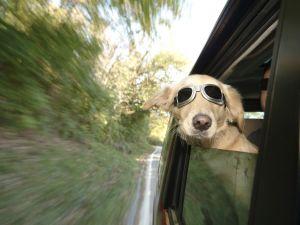 traveling dog catching air - photo by Danijel Juricev